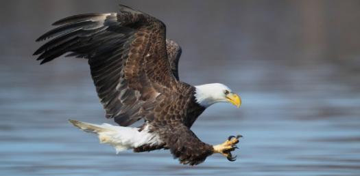 The Philippine Eagle Quiz!