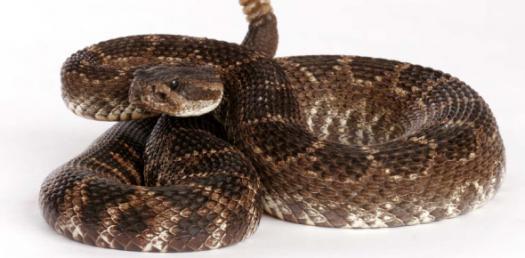 What Snake Should I Get?