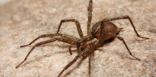 Are You A Bread Spider?