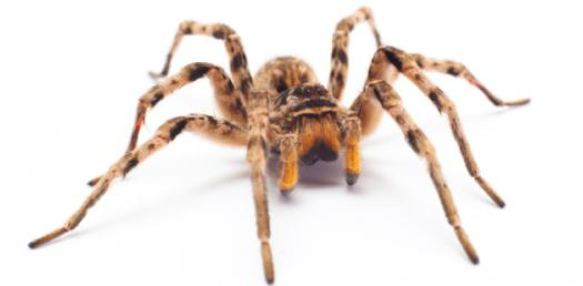 What Do You Know About Spiders?