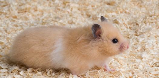 Hamsters Quiz