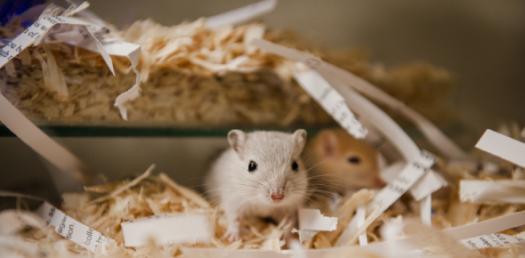 Hamster Knowledge Quiz