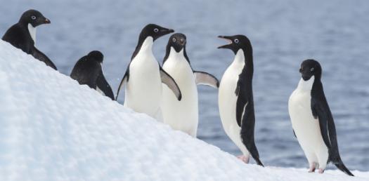 Penguin Quiz