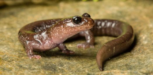 How Much Do You Know About Amphibians?