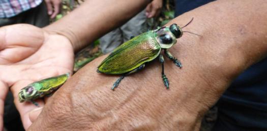 Invertebrates Quiz