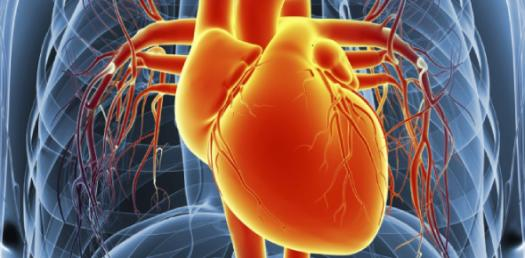 Trivia: Can You Identify All The Parts Of A Human Heart?