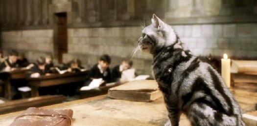 Harry Potter: What Would Your Animagus Animal Be? - ProProfs