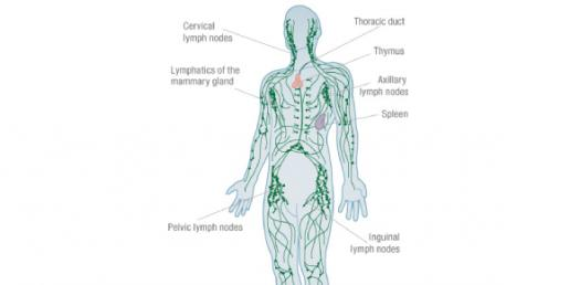 Lymphatic System Practice Questions Test Quiz! - ProProfs Quiz