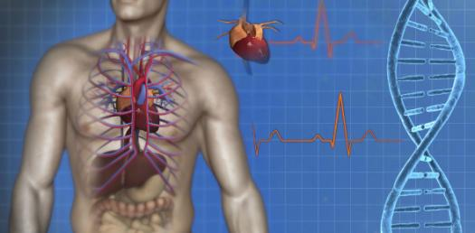 Do You Know About The Anatomy Of The Human Heart Quiz