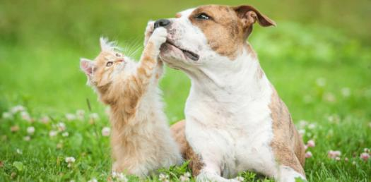 What Pet Is Right For You?