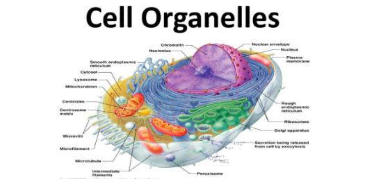 What Do You Know About Organelles? Trivia Questions Quiz