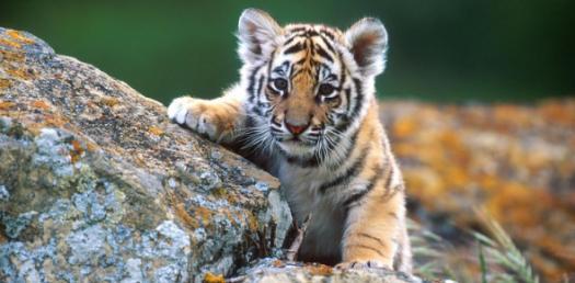 An Interesting Trivia Quiz On Animals!