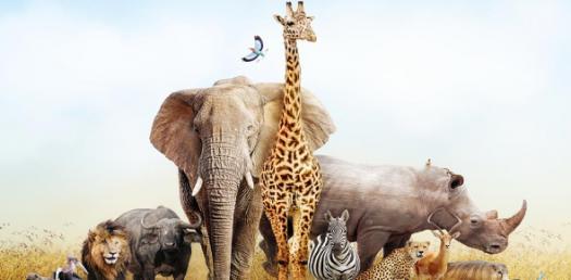The Amazing Quiz On Animal - 4