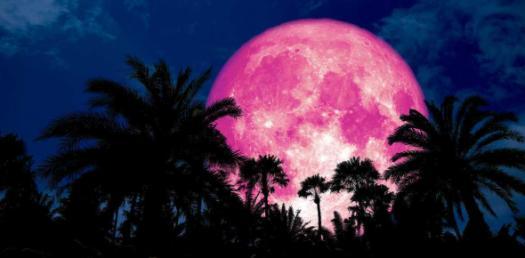 Pink Moon Album Quiz
