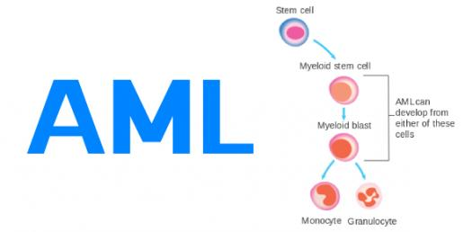 AML Training Quizzes Online, Trivia, Questions & Answers
