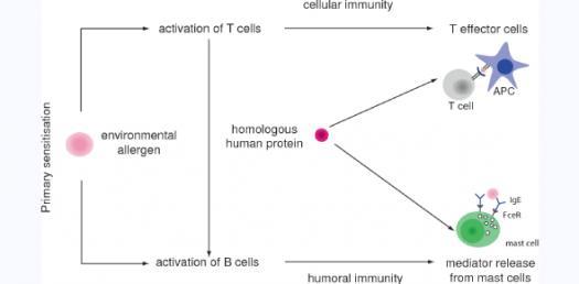 white blood cells Quizzes & Trivia