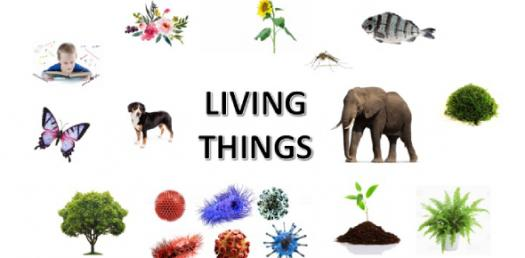 World Living Things! Trivia Questions Quiz