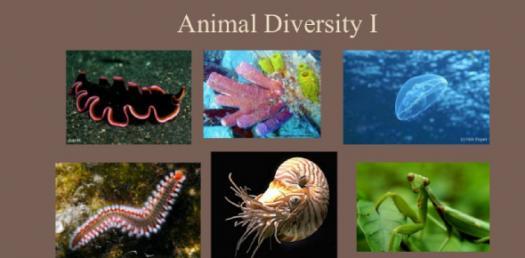 A Unique Animal Diversity Quiz!