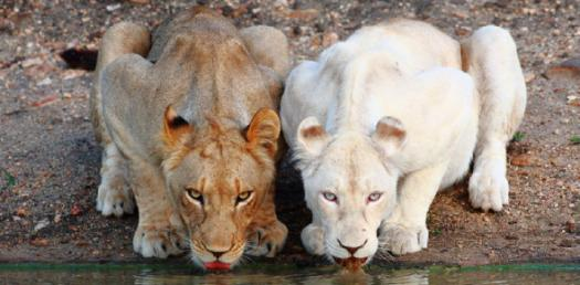 An Amazing Animal Diversity Quiz!