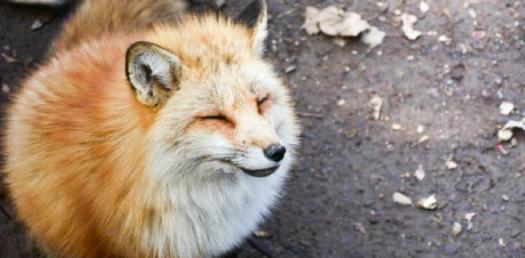 Japan Animal Relief Club! Trivia Questions Quiz