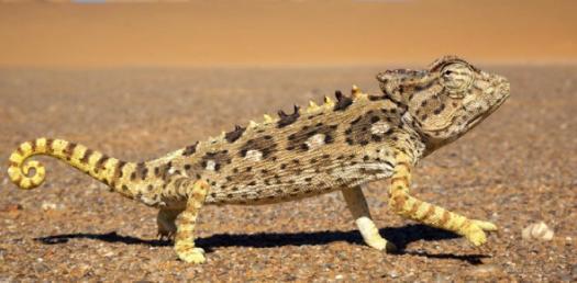 Ectothermic Animal Bio Quiz