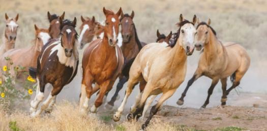 What Do You Know About Horses? Trivia Quiz