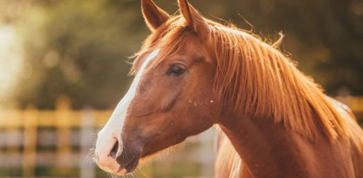 How Well Do You Actually Know About Horses?