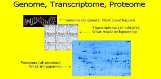 Genomes, Transcriptomes And Proteomes! Trivia Questions Quiz