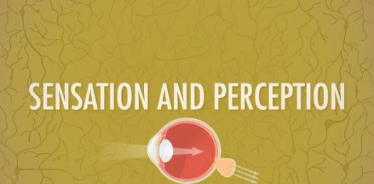 Quiz: Psychology Sensation And Perception - ProProfs Quiz