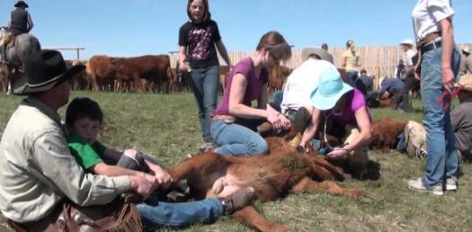 Trivia Quiz On Cattle Branding!