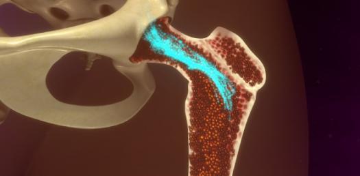 Bone Marrow And Hematopoietic Stem Cells! Trivia Questions Quiz