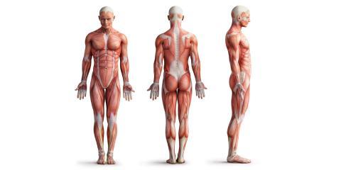 Cross-sectional Anatomy Test! Radiography Trivia Quiz