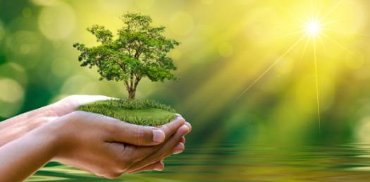 The Basic Trivia Quiz On Ecosystem!