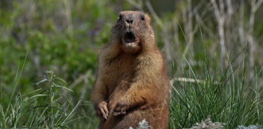 What Do You Know About Groundhog?