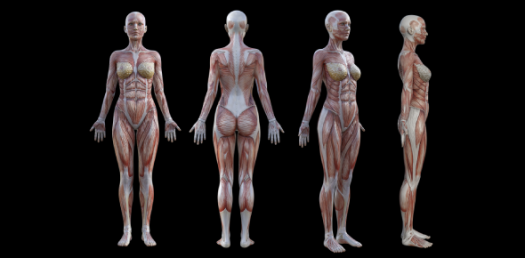 Anatomy Of Aromatherapy! Trivia Questions Quiz