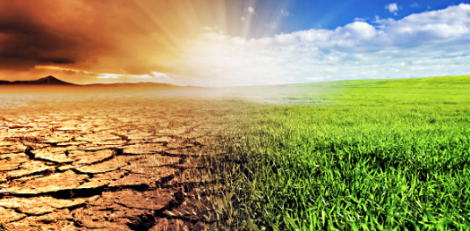 Chapter 8: Climate Change Trivia Quiz!