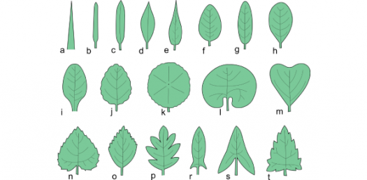 Identify The Types Of Leaves! Interesting Trivia Quiz