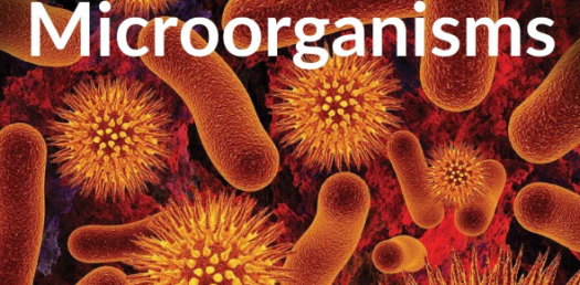 Learn About Microorganisms! Trivia Facts Quiz