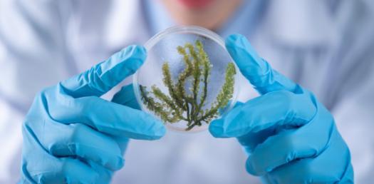 Quiz: Important Biology Trivia Questions