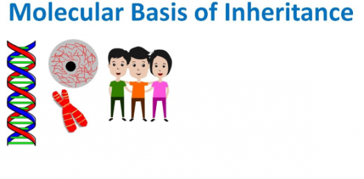 Trivia Quiz: What Do You Know About The Molecular Basis Of Inheritance?