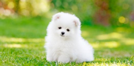 Quiz: Are You Ready To Own A Puppy?