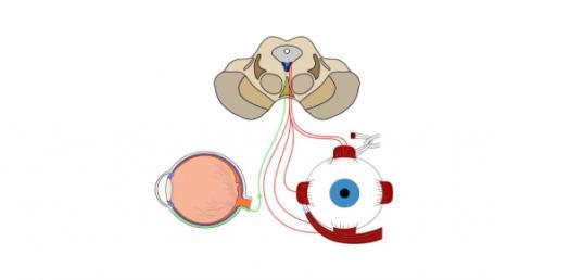 Vision Test: Trivia Quiz On Oculomotor Nerve Function!