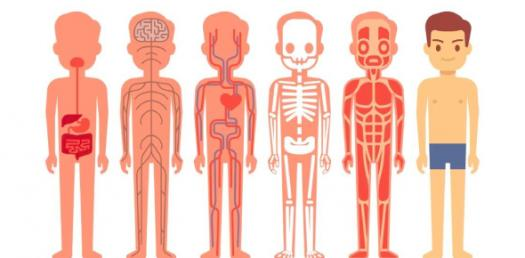 Anatomy And Physiology- Blood Quiz Ch.16
