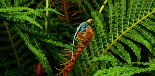 Important Trivia Quiz On Biodiversity