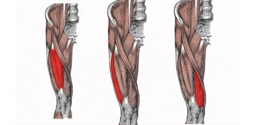 Quiz: Lower Limb Anatomy