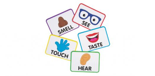 Trivia Quiz: How Well Do You Know About The Five Senses?