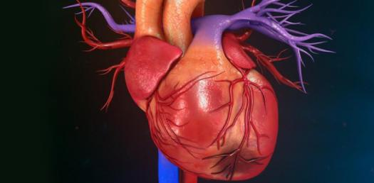 Heart Quiz: Questions On Arteries, Veins And Capillaries!