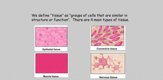 Types Of Tissues: Can You Identify? Trivia Quiz