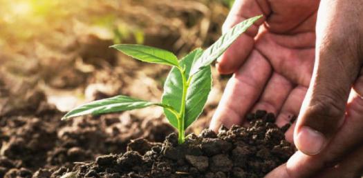 Quiz: Corporate Social Responsibility & Sustainability