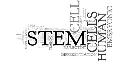 Can You Identify Word Stem Terms? Trivia Quiz